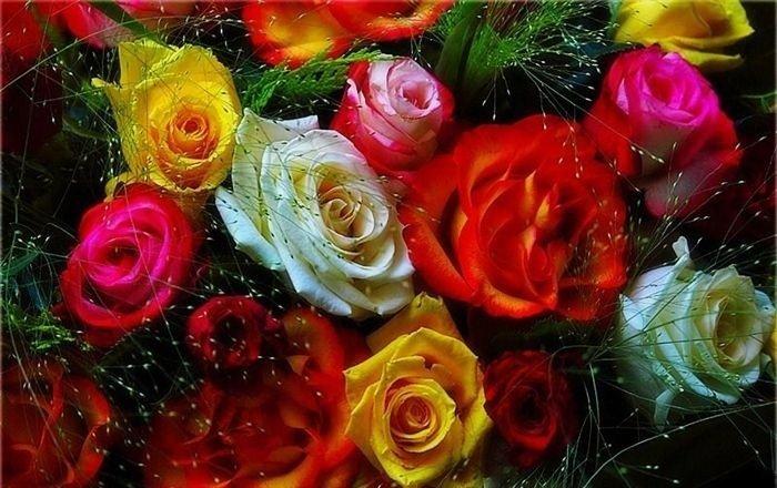 Яндекс красивые цветы мира