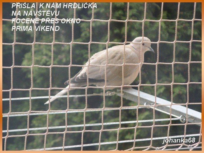 An den Beitrag angehängtes Bild: http://img9.dreamies.de/img/651/b/m6v4nswgnxg.jpg