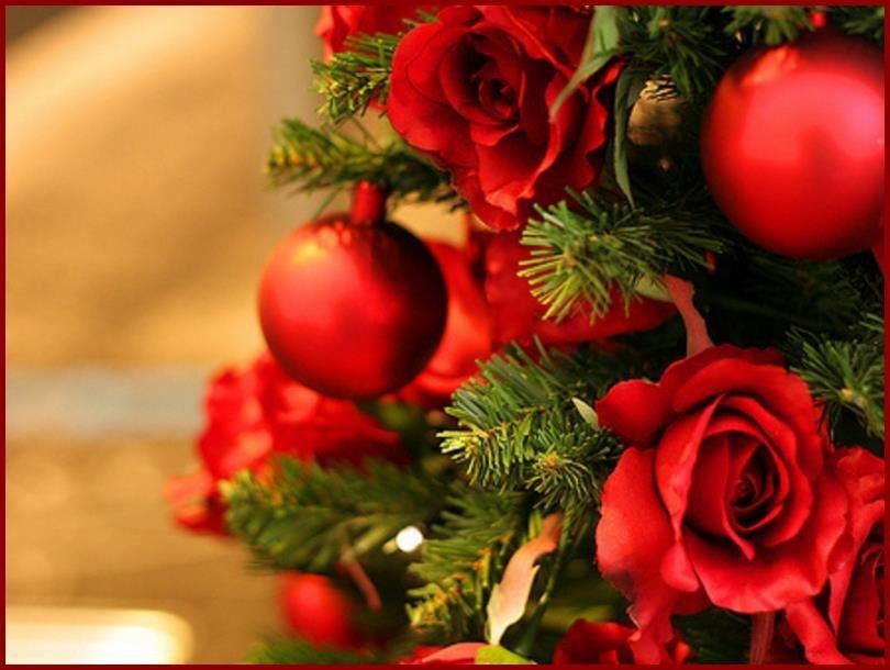 Фото, рождество, глобусы, красная, розы Фото, Картикни, Стил…
