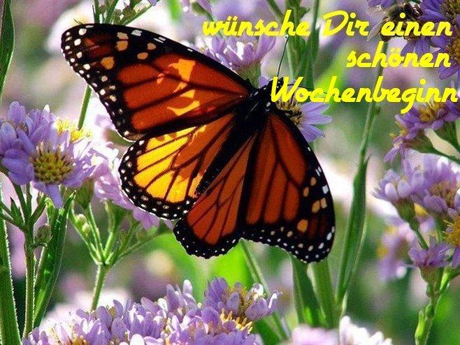 An den Beitrag angehängtes Bild: http://img9.dreamies.de/img/986/b/316lfvhorbm.jpg